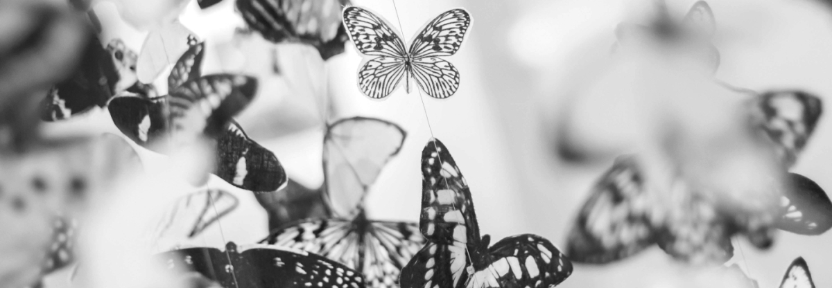 """Képtalálat a következőre: """"chiara pillangólány"""""""